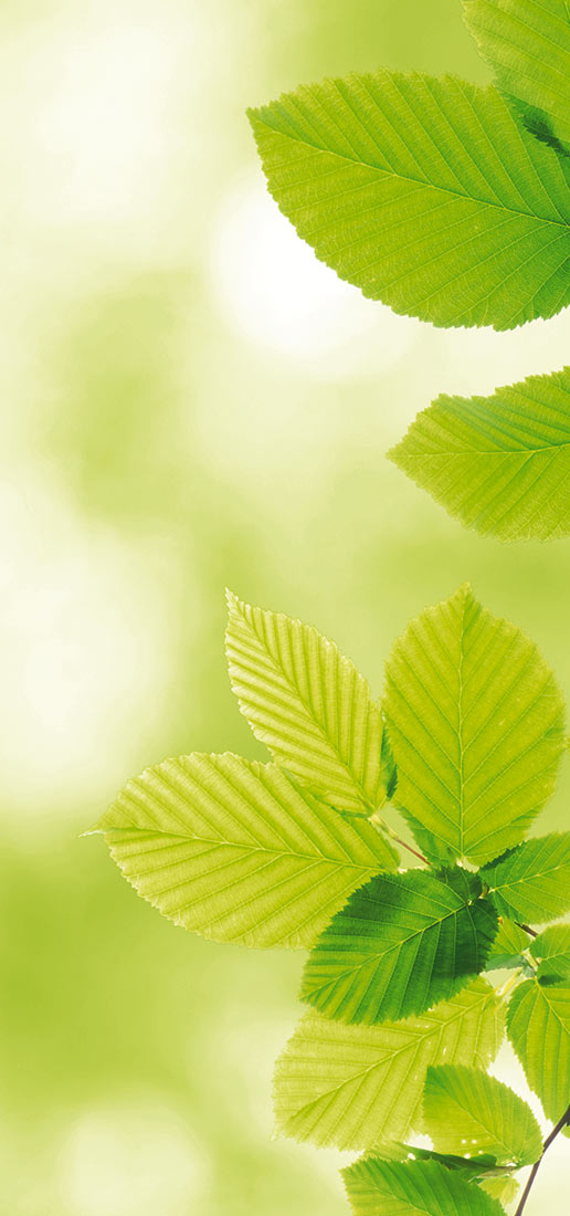 Sustainability and environmental responsibility